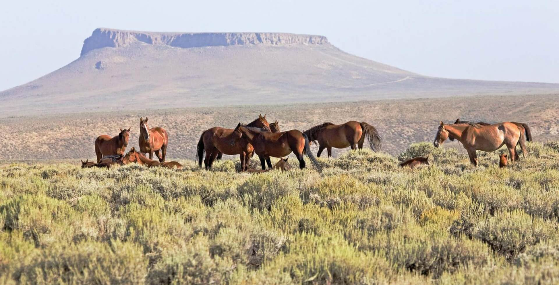Wild Horses Of Pilot Butte Sweetwater County Wyoming